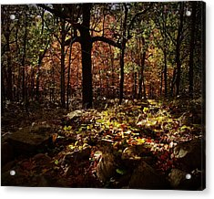 Forest Illuminated Acrylic Print by Linda Unger