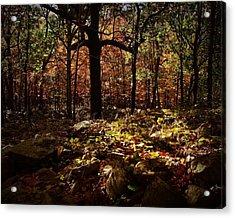 Forest Illuminated Acrylic Print by Linda Unger