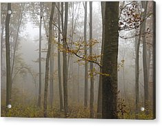Forest In Autumn Acrylic Print by Matthias Hauser