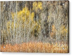 Forest In Late Fall At Scarborough Bluffs Acrylic Print by Elena Elisseeva