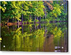 Forest In Reflection Acrylic Print