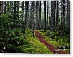 Forest Acrylic Print