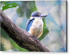 Forest Kingfisher Acrylic Print