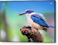 Forest Kingfisher With Breakfast Acrylic Print