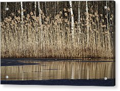 Forest Lake In Early Spring Acrylic Print by Alex Sukonkin