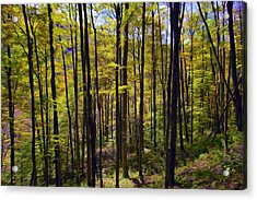 Forest Acrylic Print by Lanjee Chee