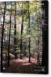 Forest Light Acrylic Print by Linda Marcille