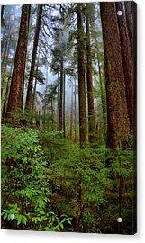 Forest Mist Acrylic Print