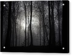 Forest Mist Acrylic Print by Mark David