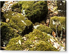 Forest Moss Acrylic Print by Suzanne Luft