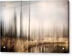 Forest Of Maine Acrylic Print