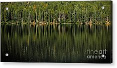 Forest Of Reflection Acrylic Print by Mitch Shindelbower