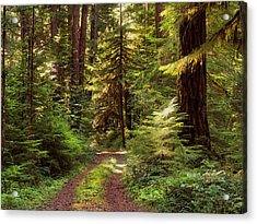 Forest Path 4 Acrylic Print by Leland D Howard