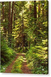 Forest Path 5 Acrylic Print by Leland D Howard