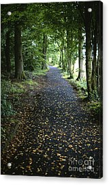 Forest Path Acrylic Print by Chris Selby