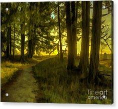 Forest Path Acrylic Print by Jean OKeeffe Macro Abundance Art
