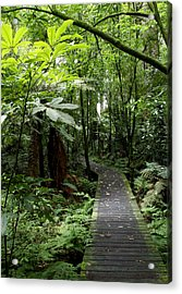 Forest Path Acrylic Print by Les Cunliffe