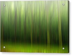 Acrylic Print featuring the photograph Forest by Rima Biswas