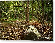 Forest River Acrylic Print by Elena Elisseeva