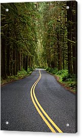 Forest Road Acrylic Print by David Andersen
