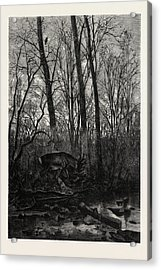 Forest Scene In Spring Acrylic Print
