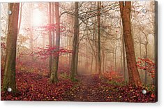 Forest Scene. Acrylic Print by Leif L??ndal