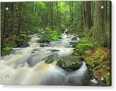 Forest Stream After Spring Rain Acrylic Print