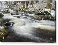 Forest Stream In Winter Acrylic Print