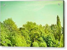 Forest Acrylic Print by Tom Gowanlock