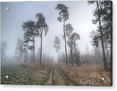 Forest Track In Mist Acrylic Print by EXparte SE