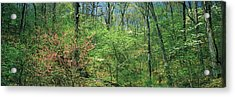 Forest, Trail Of Tears, Shawnee Acrylic Print by Panoramic Images