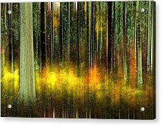 Forest V Acrylic Print