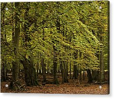 Acrylic Print featuring the photograph Forest Visitor by Inge Riis McDonald