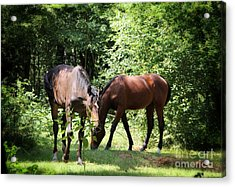 Forest Visitors Acrylic Print