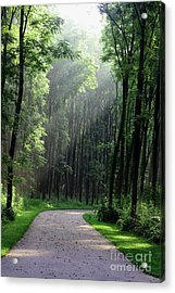 Acrylic Print featuring the photograph Forest Walk by Anita Oakley