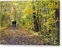 Forest Walk Acrylic Print