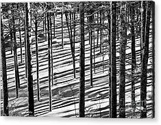 Forest's Shadows Acrylic Print