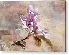 Forever Blossom Acrylic Print by Elaine Manley