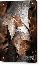 Acrylic Print featuring the photograph Forever Entwined by Ellen Cotton