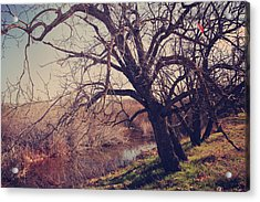 Forever In My Heart Acrylic Print by Laurie Search