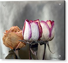 Acrylic Print featuring the photograph Forever Roses by Penny Hunt