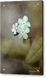 Forget Me Not 03 - S07bt07 Acrylic Print by Variance Collections