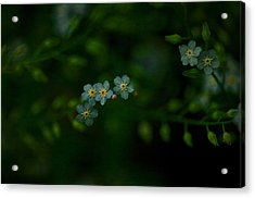 Forget  Me Not 4 Acrylic Print