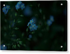 Forget Me Not 5 Acrylic Print