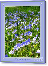 Forget Me Not Acrylic Print by Leone Lund