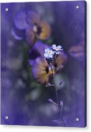 Forget Me Not Acrylic Print by Richard Cummings