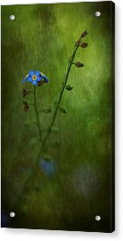 Forget Me Not Light Space Time Botanicals Art Exhibition 2014 Special Merit Award Acrylic Print