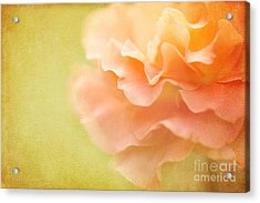 Forgiveness Acrylic Print by Beve Brown-Clark Photography