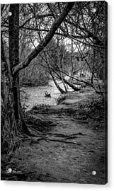 Forgotten Path Acrylic Print by Charlie Duncan