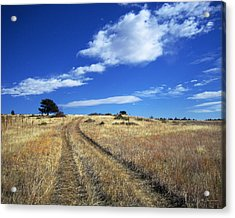 Forgotten Road Acrylic Print by Julie Magers Soulen